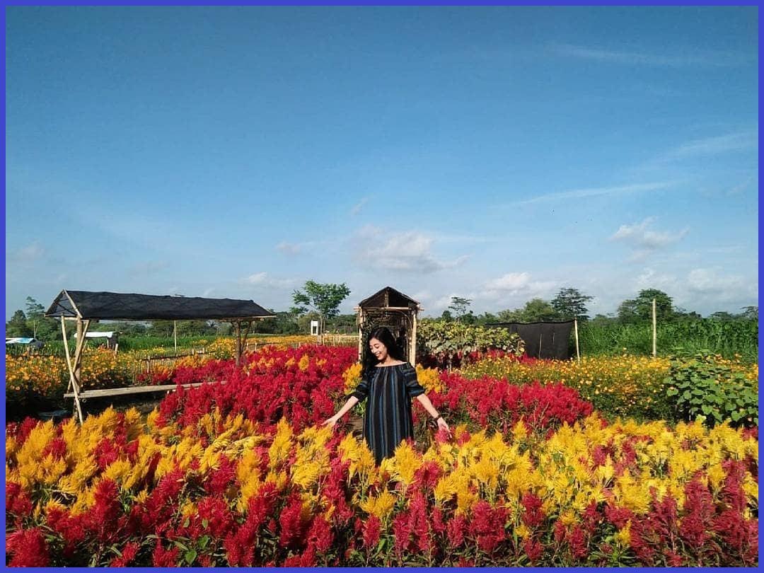 taman bunga bono tempat wisata di Solo yang Instagrammable